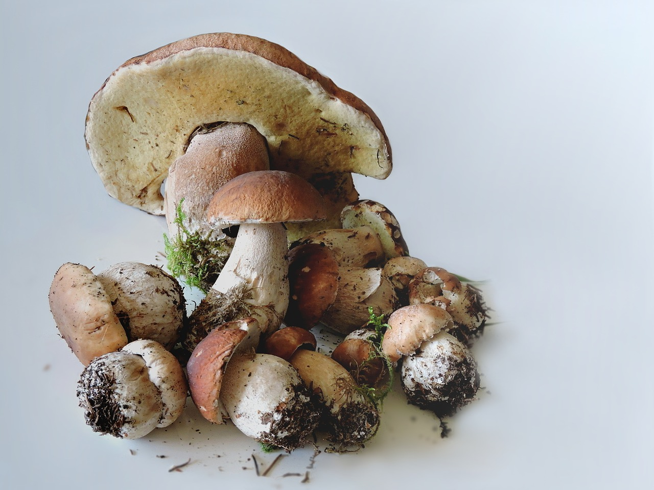Are mushrooms anti-aging?